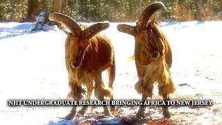 NJIT Undergraduate Research at Six Flags Safari Off Road Adventure
