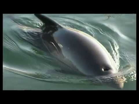 Protecting Harbour Porpoises