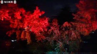 秋の情景テーマに光の競演 30日から「アーティスティック・オータム・ナイト」 静岡・沼津