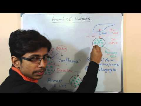Mammalian cell culture 4 - primary cell culture