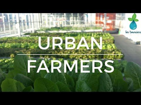 chez les Urban Farmers en Suisse