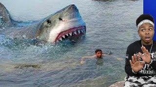 MASSIVE Shark sneaks up on boy