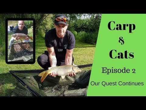 Carp & Cats Episode 2 The Quest Continues @ Fisherwick Lakes And Weston Lawns Fisheries