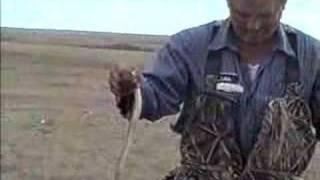 stupid man and a rattlesnake