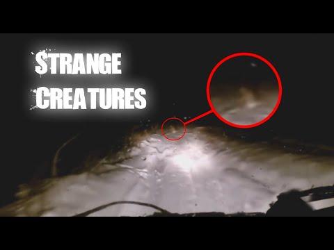 Unlisted Mr Nightmare Videos 3 very disturbing true deep web horror stories. unlisted mr nightmare videos