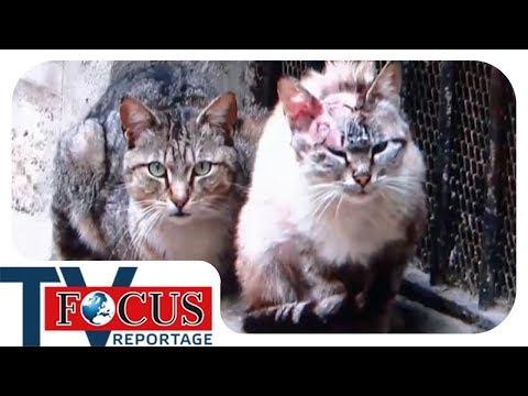 Katzenplage - Focus TV Reportage