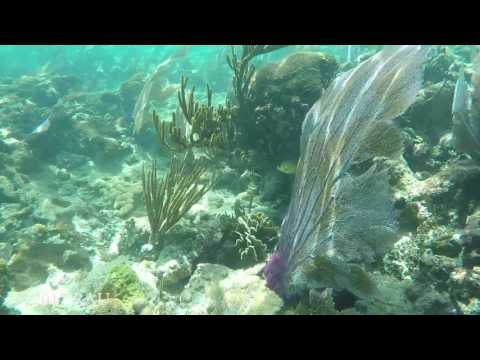 Lime Cay snorkel 170117