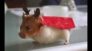 Милые животные в новогодних костюмах!