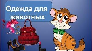 Одежда для животных. Как сделать одежду для кошек своими руками