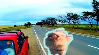Отдыхать как свиньи. Дорога на Качу. Влог с кабины. Эпизод 2(, 2017-06-25T05:28:11.000Z)