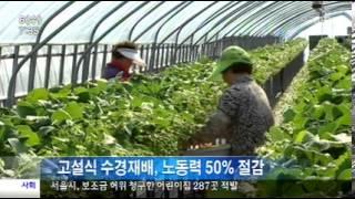 [대구MBC뉴스]고설식 수경재배가 대안