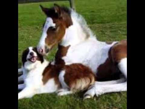 Video sui cavalli e i cani youtube for I cani youtube