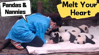 This panda video will melt your heart completely | iPanda thumbnail