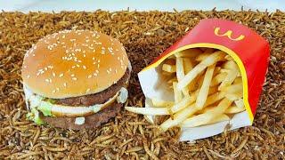 McDonalds vs. Gusanos