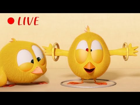 🔴 LIVE CARTOON | WHERE'S CHICKY | 🐥 Cartoon in English for Kids  | Live Stream