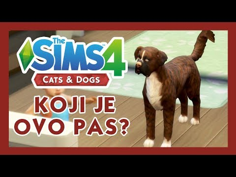 Cats & Dogs - SIMS 4 - ŠTA JE S PSOM? - #15
