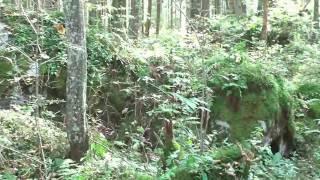 der Hintersee bei Berchtesgaden / Ramsau - Ein Spaziergang um den See herum - gesehen von Thilo