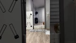 웰시코기의 휴지벽 넘기 도전기 !!!