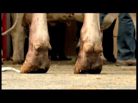 5216LI FRANCE-FARM SHOW