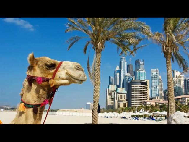 Лучший Город  Дубай ОАЭ Dubai United Arab Emirates
