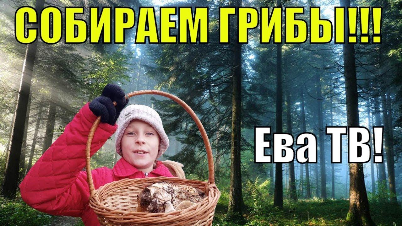 ВЛОГ собираем грибы В ЛЕСУ Ева ТВ - YouTube