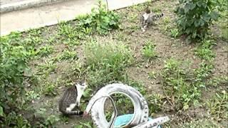 Балкон с окошком для кошки
