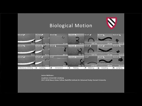 Biological Motion | Janina Wellmann || Radcliffe Institute
