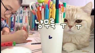 [ENG] 냥존심없는 고양이, 오늘따라 바쁜 꼬마집사에게~!!
