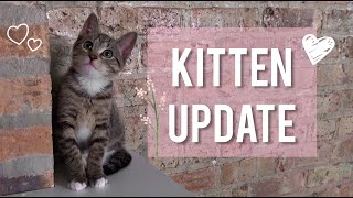 Kitten Growth Update + Litter Box Review + Cat Allergy Tips + New Toys Q&A