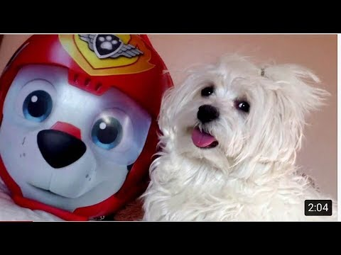 AMAZING SWEET FUNNY SMART CUTE LOVE DOGS - Paw Patrol Trip Bound Making - The Life of Ketchup