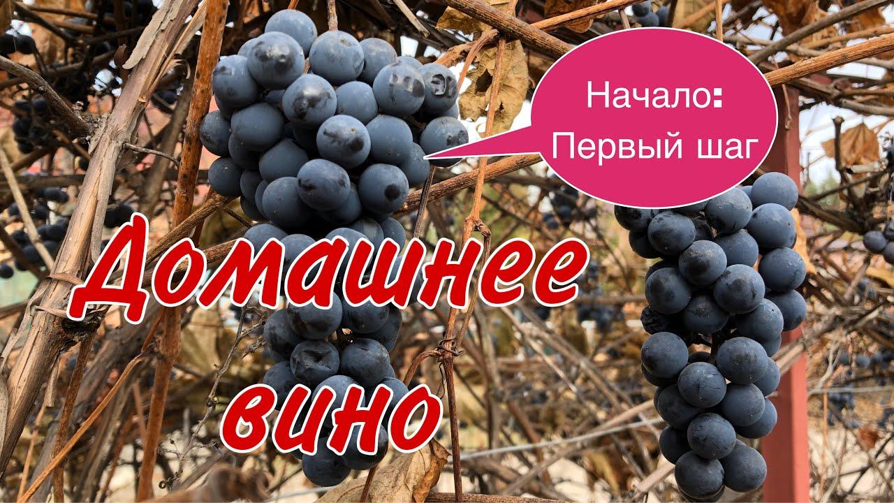 Вино ДОМАШНЕЕ. Сорт винограда Изабелла. #виносвоимируками#виноизвинограда#домашнеевиноградноевино