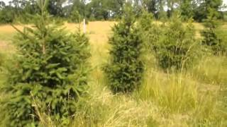 RRR A Place To Cut Your Own Christmas Trees Near Warrington Pa