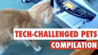 Tech-Challenged Pets || Pets vs Technology Funny Pet Compilation