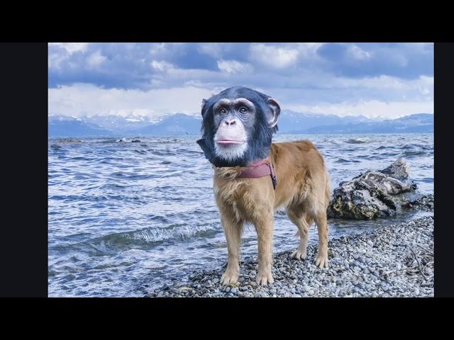 Funny Photoshop Animals Compilation / Lustige Tierbilder