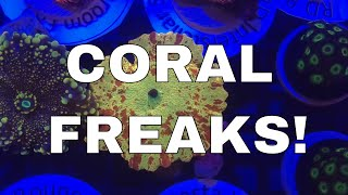 CORAL FREAKS - UK's First Coral show