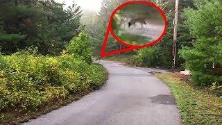 Пес начинает странно себя вести и убегает в лес. Её хозяин бежит за ним, обнаруживает нечто ужасное.