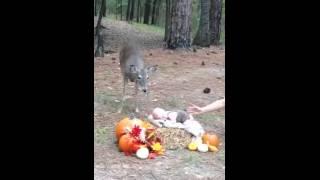 Deer Wanders Into Baby's Photo Shoot -- PHOTOBOMB!