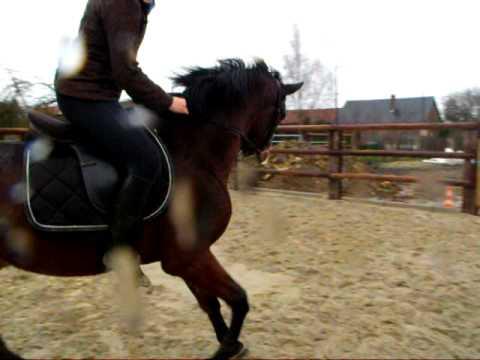 Nos chevaux puissance saut d 39 obstacle doovi - Frison qui saute ...