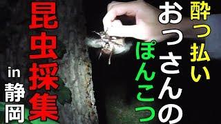 2018年初昆虫採集へ行ってきました! 小一時間で15匹のカブトムシとクワ...