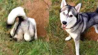 Hilariously Cute Dogs | Funny Pet Videos