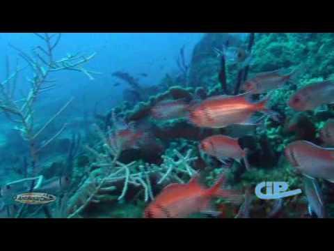 Antilles Jet - Plongée guadeloupe