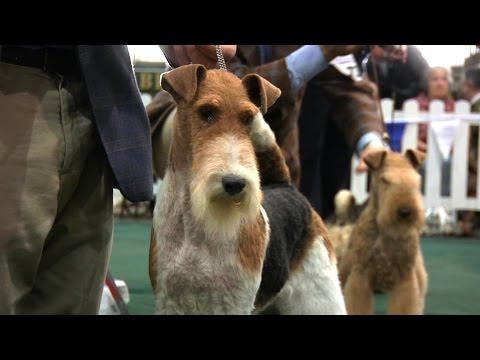 National Terrier 2016 - Best in Show