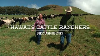 Hawaii's Cattle Ranchers | Our Island Industry