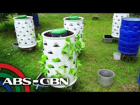 Salamat Dok: Vertical Farming | Okay Eco