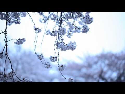 """KASHIWA Daisuke - april.#19 (MUSIC VIDEO) """"from Re:"""""""
