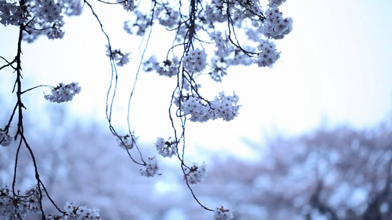kashiwa daisuke april.#2
