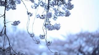 """KASHIWA Daisuke / april.#19 (MUSIC VIDEO) """"from Re:"""""""