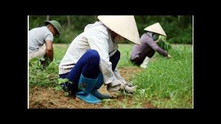 Thực phẩm hữu cơ tại Đà Nẵng được ưa chuộng  ECO-HEALTH.VN