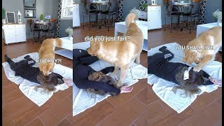 faking-my-death-in-front-of-my-dog-funny-dog-reacts