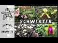 My Visit to Schwerter Orchids in Germany